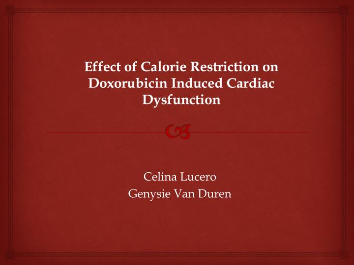 effect of calorie restriction on doxorubicin induced cardiac dysfunction n.