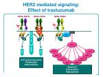 her2 mediated signaling effect of trastuzumab