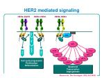 her2 mediated signaling