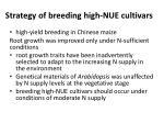 strategy of breeding high nue cultivars