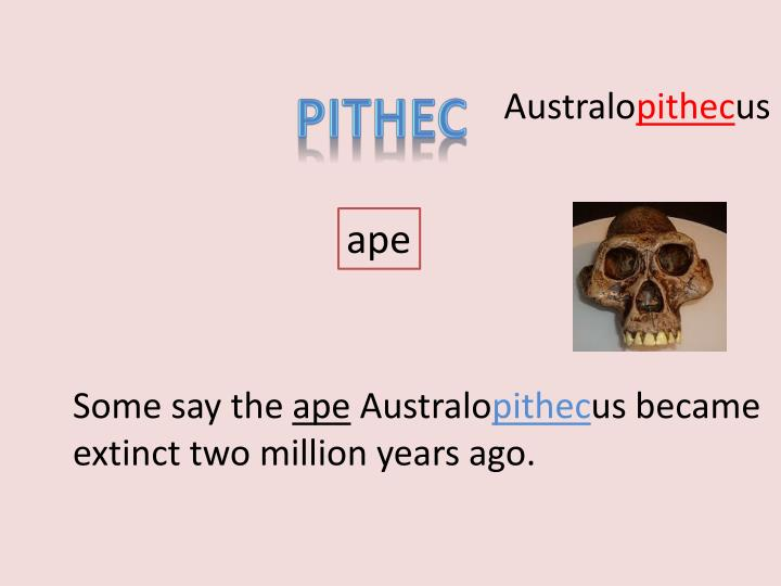 PITHEC