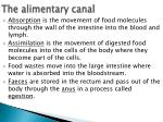 the alimentary canal3