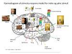 hjernediagram af stimulus respons model for indre og ydre stimuli