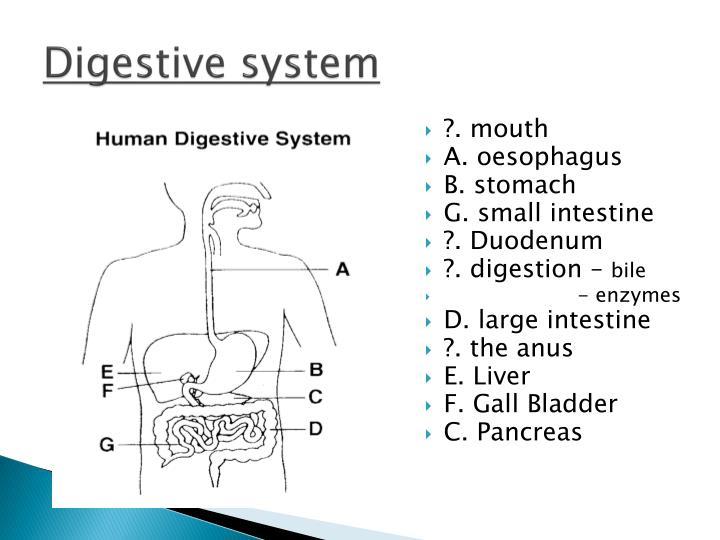 Digestive system1