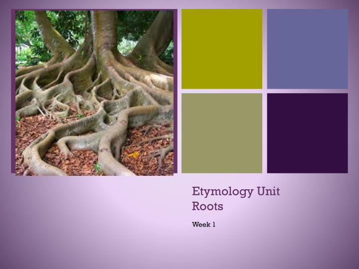etymology unit roots n.