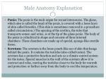 male anatomy explanation