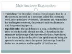 male anatomy explanation1