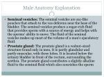 male anatomy explanation3