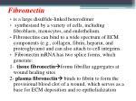 fibronectin
