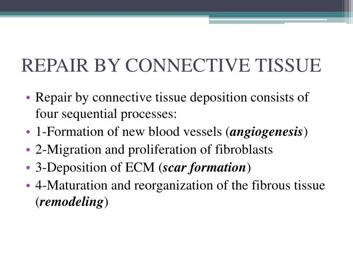 REPAIR BY CONNECTIVE TISSUE