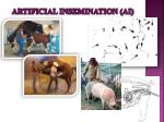 artificial insemination ai1