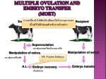 multiple ovulation and embryo transfer moet