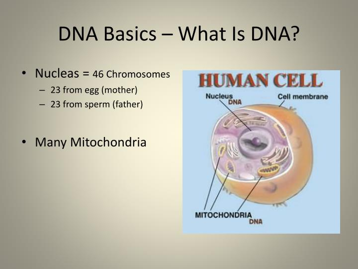 Dna basics what is dna1