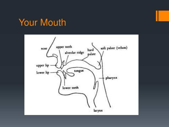 Your Mouth