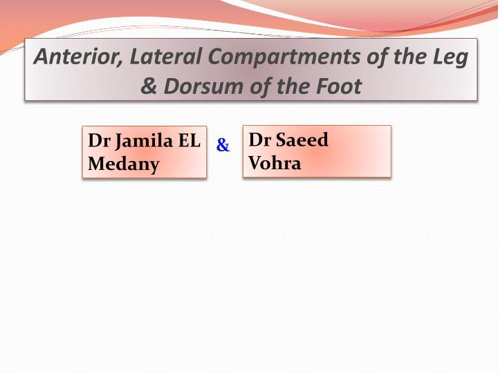 anterior lateral compartments of the leg dorsum of the foot n.