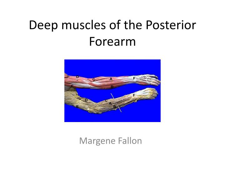deep muscles of the posterior forearm n.
