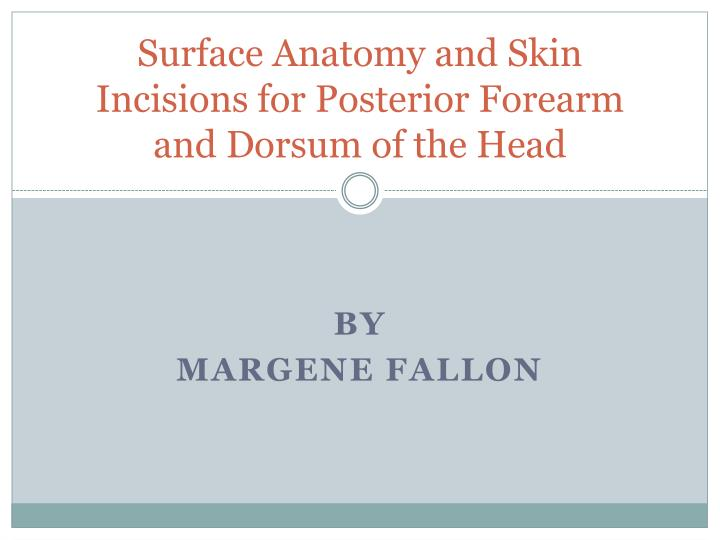 surface anatomy and skin incisions for posterior forearm and dorsum of the head n.