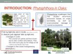 introduction phytophthora in oaks