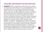 tipus m s importants de protozoosis