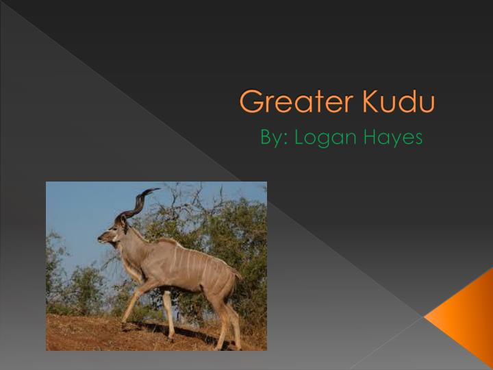 greater kudu n.