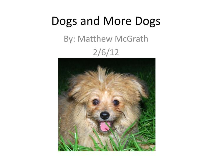 dogs and more dogs n.