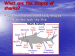 what are the shapes of sharks