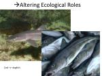 altering ecological roles