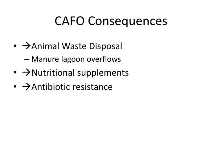 Cafo consequences