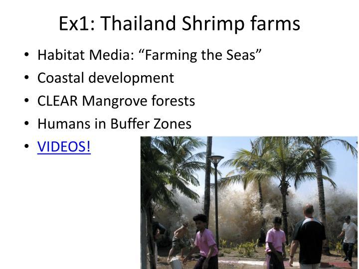 Ex1: Thailand Shrimp farms