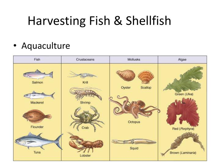 Harvesting Fish & Shellfish