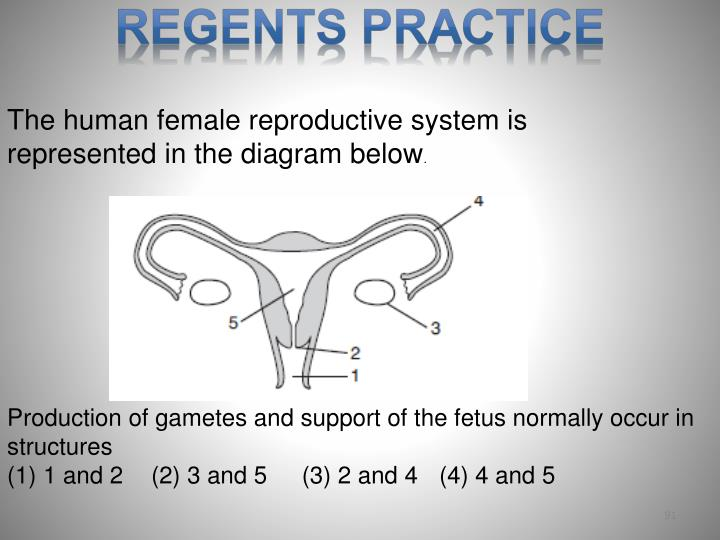 The human female reproductive system is represented in the diagram below