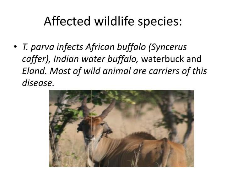 Affected wildlife species: