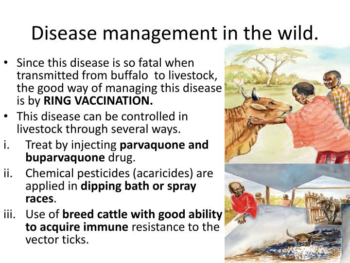 Disease management in the wild.