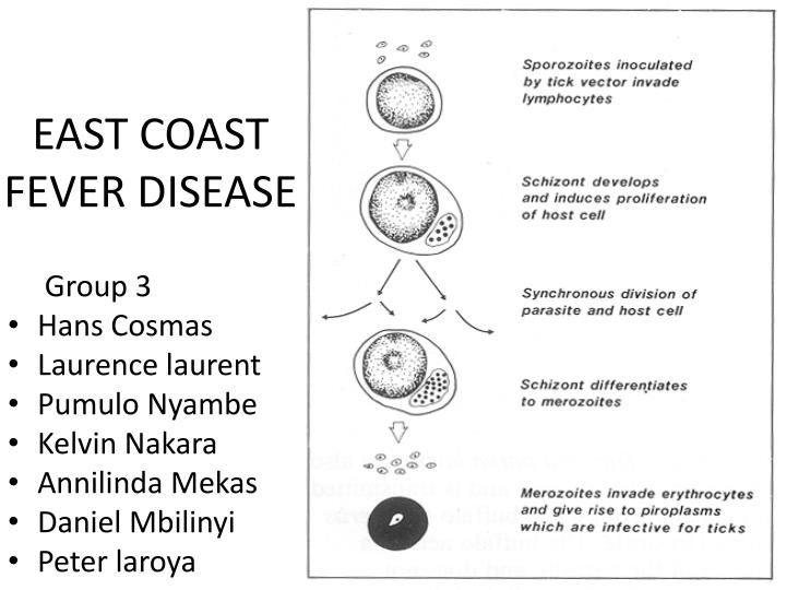 east coast fever disease n.