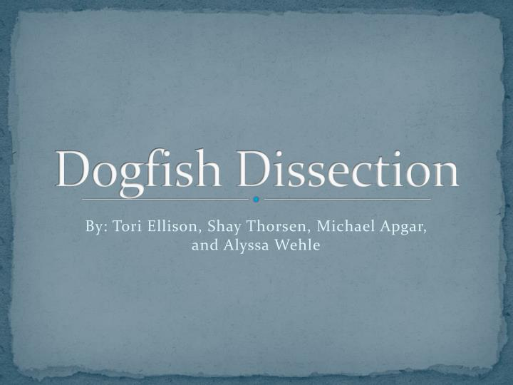 dogfish dissection n.