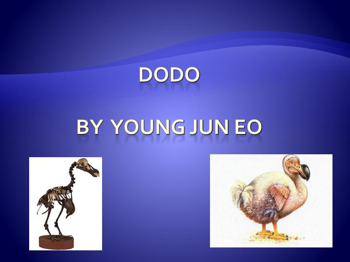 dodo by young jun eo n.