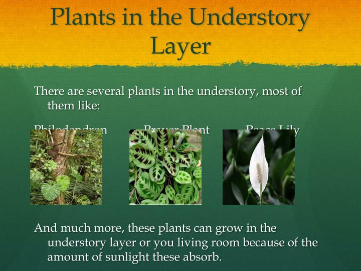 Plants in the Understory Layer