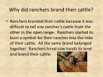 why did ranchers brand their cattle