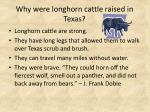 why were longhorn cattle raised in texas