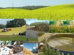 vrste biomase