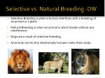 selective vs natural breeding dw