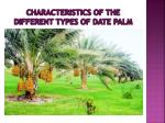 characteristics of the different types of date palm