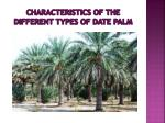 characteristics of the different types of date palm1