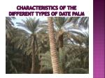 characteristics of the different types of date palm2
