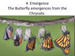 4 emergence the butterfly emergences from the chrysalis