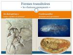 formes transitoires les cha nons manquants