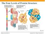 the four levels of protein structure