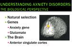 understanding axniety disorders the biological perspective