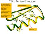7 5 1 tertiary structure
