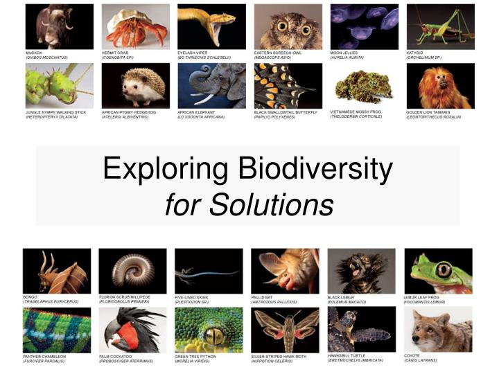 exploring biodiversity for solutions n.